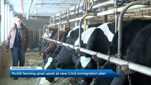 CAQ's immigration bill could put an end to McGill graduate's dreams