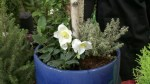 GardenWorks:  Winter-hardy planters