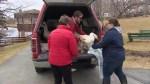 Sillivans Pond geese return