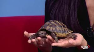 Manitoba Reptile Breeders Expo