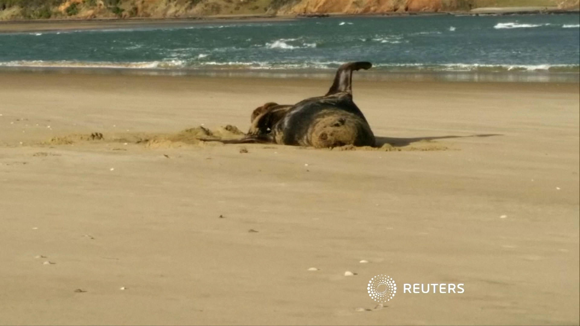 Sea lion video found on USB in frozen leopard seal poo