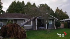 Strong winds batter B.C. and Washington