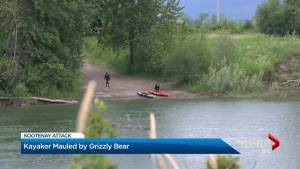 Man camping in the woods attacked by grizzly bear