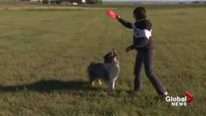 Magrath dog owners in desperate need of official dog park