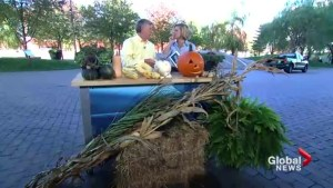 Halloween-friendly gardening tips