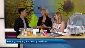 How to avoid, detect and treat bug bites