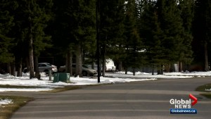Cougar and bear warnings issued by Town of Redwood Meadows