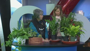 How to prepare your house plants for when you go away