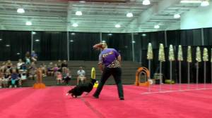 Old dogs, new tricks in Superdogs show at Saskatoon Ex