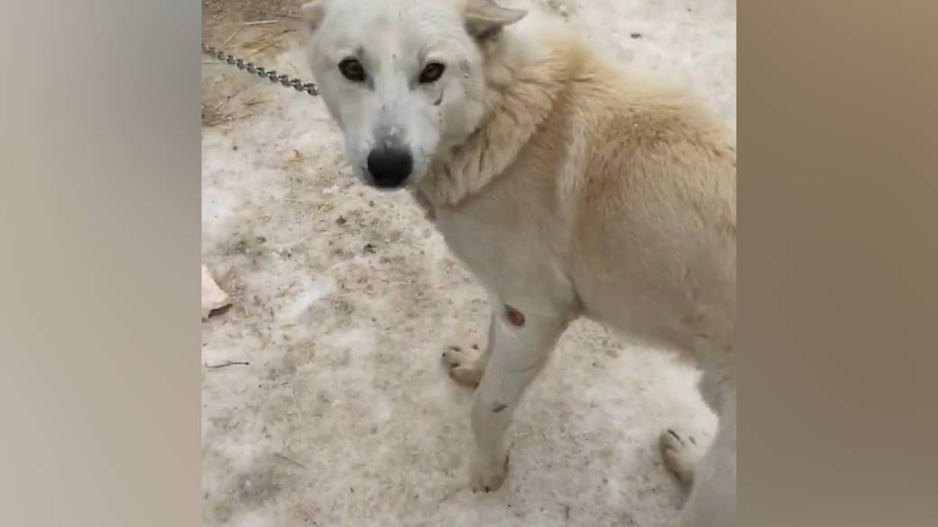 Ontario Couple Finds Sickening Conditions At Dog Sledding