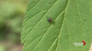 Lyme disease on the rise in Quebec