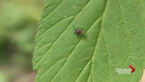 Lyme disease on the rise in Quebec (02:12)