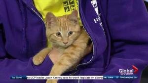 Edmonton Humane Society: Chester the kitten