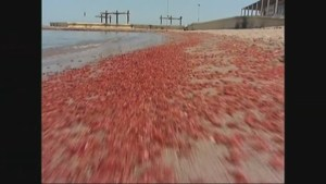 'Red Tide' outbreak spreading as environmental crisis continues in Chile