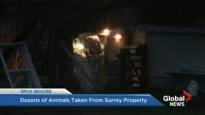 B.C. SPCA seizes dozens of animals from Surrey property