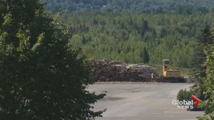 Author of forestry practices review 'anxious' to see government's plans