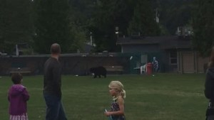 Bear runs through busy Port Moody park