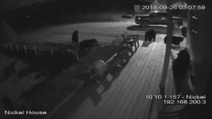 Alberta man baffled after 7 bears caught on camera on his deck
