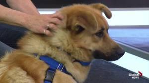 Edmonton Humane Society: Durango