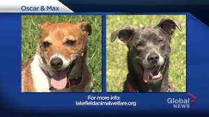 Global Peterborough's Shelter Pet Project – Oscar and Max