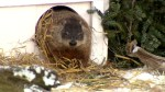 Groundhog Day 2019: 'the coming of spring will surely be slow' according to Shubenacadie Sam