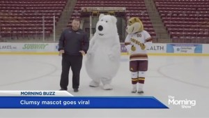 This polar bear can't handle ice