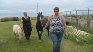 Estevan, Sask. sisters providing forever home for little equines