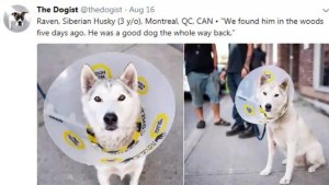 Could a missing B.C. dog be in Montreal?