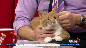Edmonton Humane Society: Nugent-Hopkins & Ivan