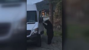 Video captures B.C. black bear opening van door