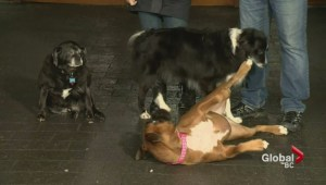 Coquitlam dog walker reunites with her rescuers