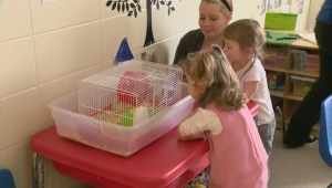 NDP government under fire for daycare program