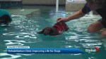 Making a Difference – Do you know the benefits of aquatics and massages for dogs?