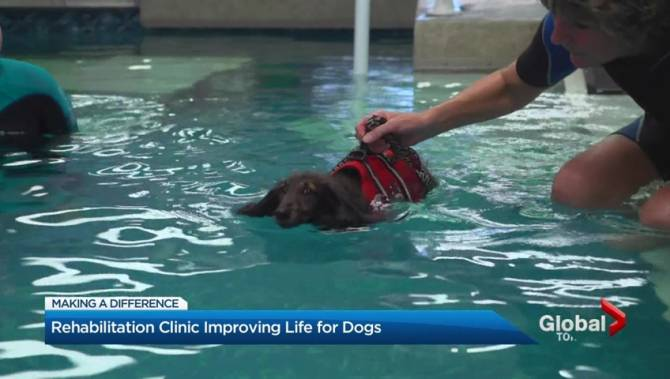 Pet Rehabilitation Facility Uses Indoor Pool To Provide Therapy For Dogs Toronto