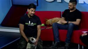 Adopt A Pal: Back to Pack Rescue (05:45)