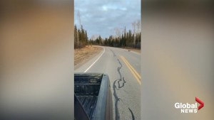 Woman records Fox, Lynx seeming to 'converse' in Fort Nelson, BC