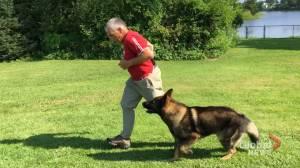 New Brunswick 'working' dog hopes to impress on international stage