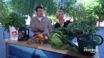 Harvesting your summer vegetables