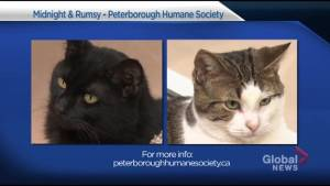Global Peterborough Shelter Pet Project: Midnight and Rumsy