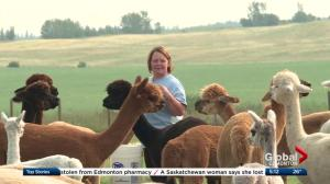 Open Farm Days gives city dwellers a glimpse at rural life