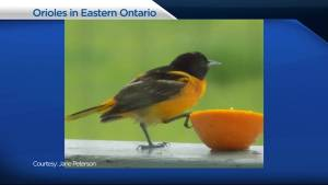 Paul Oliver of Urban Nature Store visits Global News Morning