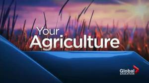 Farmers expert voices behind Saskatchewan crop report