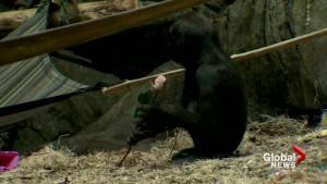 Calgary Zoo creatures enjoy Valentine's Day