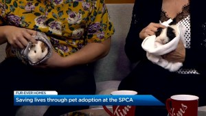 Saving lives through pet adoption at the SPCA