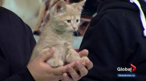 Calgary Humane Society Pet of the Week: Leah, Lucky and Lance