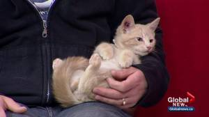 Calgary Humane Society Pet of the Week: Superman and Clark Kent (03:42)