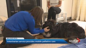 Toronto mobile veterinary service created for geriatric and end-of-life care for animals