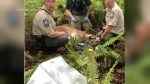 Washington state killer cougar to undergo necropsy
