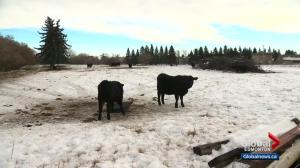 Alberta beef producers welcome new deal with China