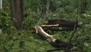 Montreal storm tears down trees, power lines